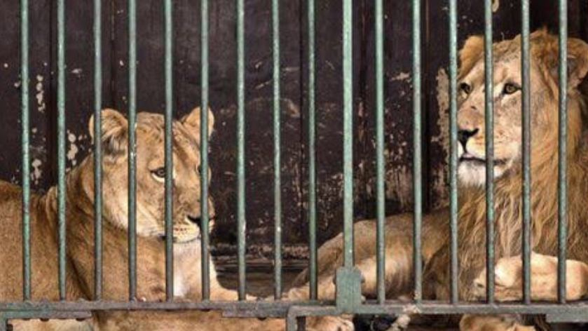 Loneliness Fills The Air; Animals And Keepers Keep Company During Covid-19 Outbreak